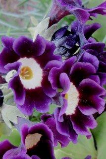 FOTKA - letos hojně kvetou