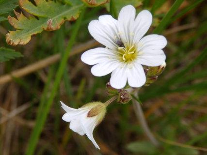 FOTKA - z květnové procházky-kvítek a moucha