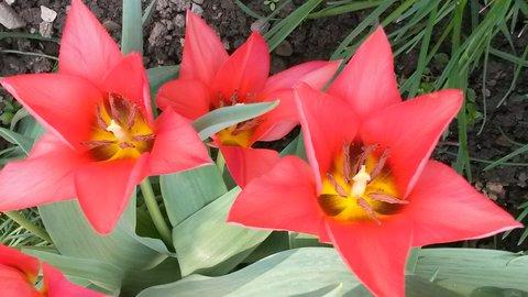 FOTKA - se třemi špičatými květy