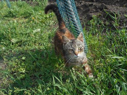 FOTKA - Žužu ,kočička