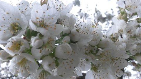 FOTKA - větvička jarní krásy
