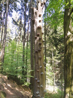 FOTKA - suchý strom obrostlý choroši