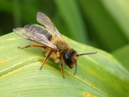 FOTKA - z květnové procházky-včelka
