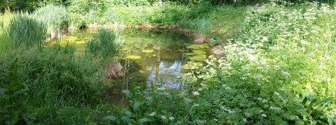 FOTKA - Začátek léta na Ritzensee - Jezírko