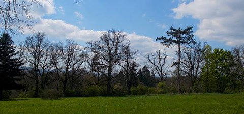 FOTKA - Stromy- každý jiný-----