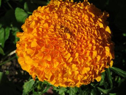 FOTKA - velká oranžová koule