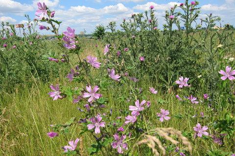 FOTKA - I plevel je pěkný