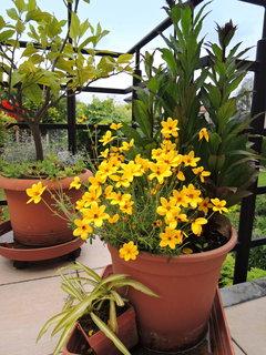 FOTKA - květinám ve velkých květináčích se na terase daří