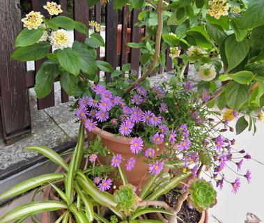 FOTKA - jedno květinové seskupení na terase
