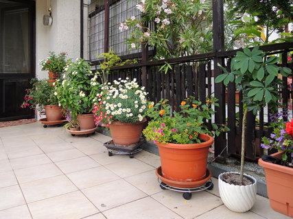 FOTKA - letos mám na terase květinovou všehochuť