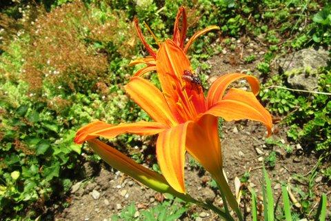 FOTKA - oranž. denivka s hmyzem