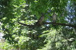 Ve stínu stromů...