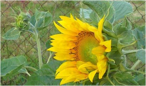 FOTKA - z profilu foto