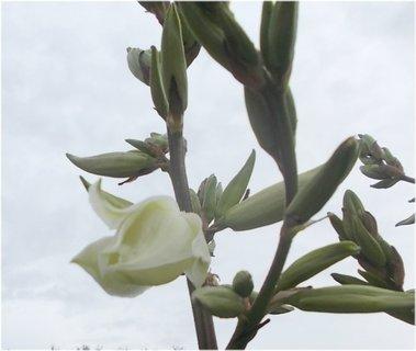 FOTKA - první květ na juce