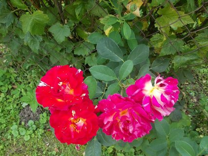 FOTKA - 4 rozkvetlé květy vedle sebe
