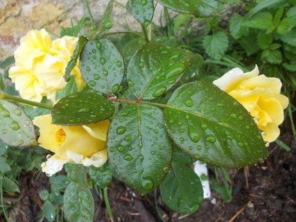 FOTKA - pod listama se schovávají květy