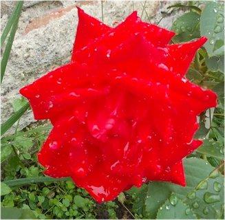 FOTKA - červená barvička