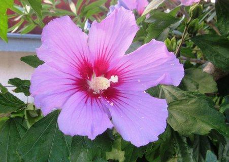 FOTKA - venkovní růžový