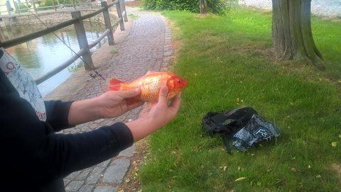 FOTKA - ryba