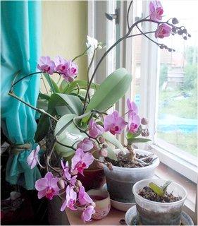 FOTKA - hodně květů má + poupata ještě