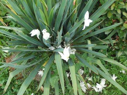 FOTKA - po lijáku je jich hodně na juce listí