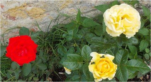 FOTKA - žluté a červená