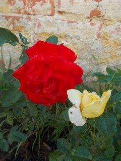FOTKA - květ a poupě
