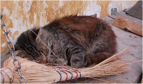 FOTKA - spím na koštěti