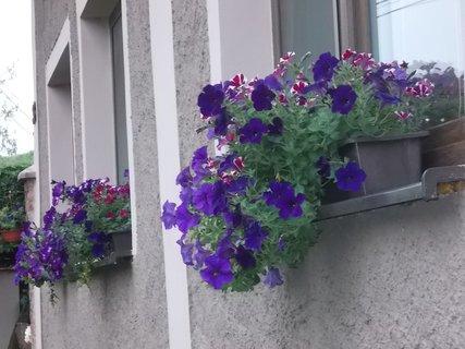 FOTKA - hezká výzdoba oken