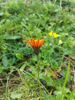 FOTKA - Loferer Almenwelt - Květinka