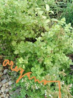 FOTKA - Bylinky na zahradě