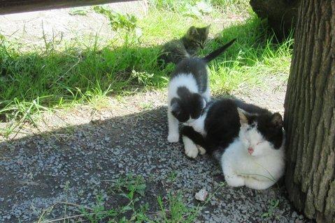 FOTKA - mamina s koťaty