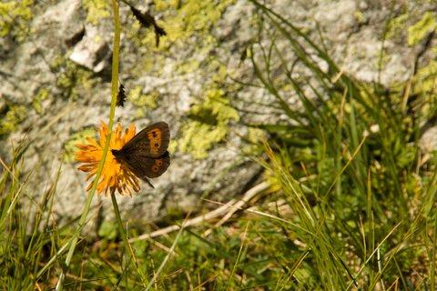 FOTKA - Výšlap k Wildseelodersee - Motýl
