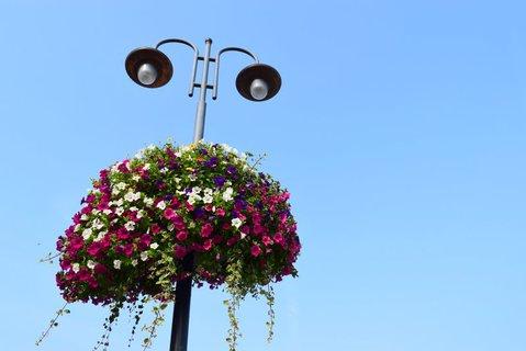 FOTKA - Kytičky pod lampou