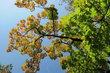 Ve Stromovce - když se počasí vydaří
