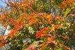 Park Podviní v podzimním čase