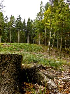 FOTKA -  A vykácíme všechny lesy   ... :-((((