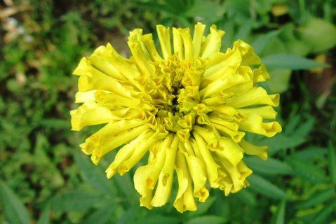 FOTKA - žlutý afrikán