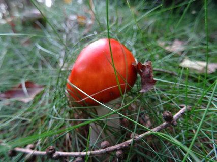 FOTKA - malinká červená houbička