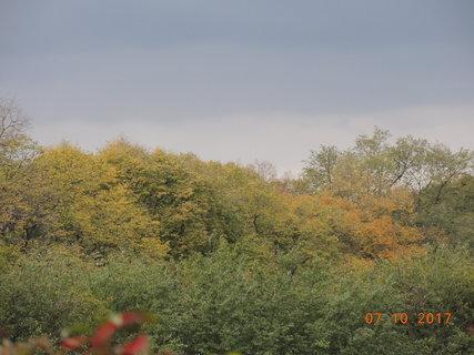 FOTKA - Konečně vidím kousek barevných stromů