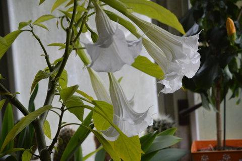 FOTKA - květy jsou pěkné