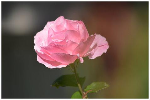 FOTKA - tahle kvetla letos hodně