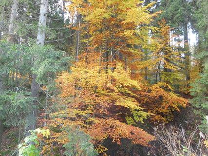 FOTKA - Podzim na horách
