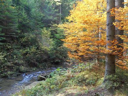 FOTKA - Jehličnaté a listnaté stromy