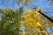 Podzimní krása v lese