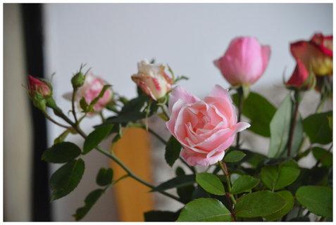 FOTKA - na to, že je konec října, jsou ještě krásné