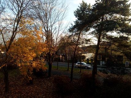 FOTKA - stromy po nedělním větru