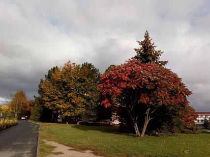 FOTKA - zbarvené stromy na pěší zoně