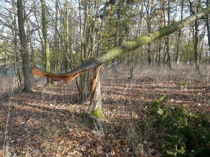 FOTKA - zlomený strom