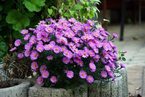 FOTKA - podzimní zářící kytička